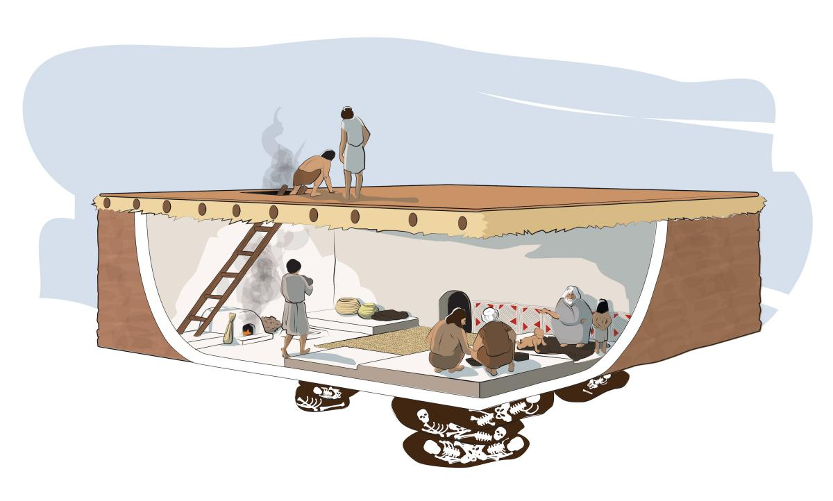 A reconstruction showing the use of space and the layout of a typical house. Illustration by Kathryn Killackey.